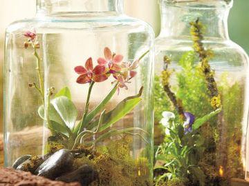 photo représentant des plantes dans des bocaux
